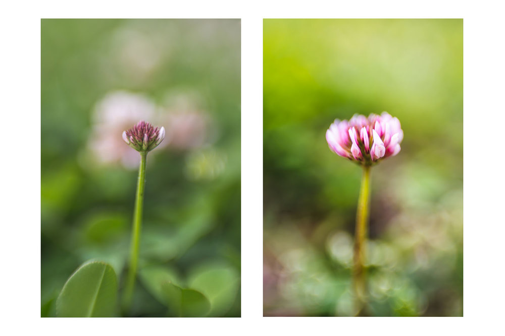 i crawled through the field of pink clovers 11.jpg
