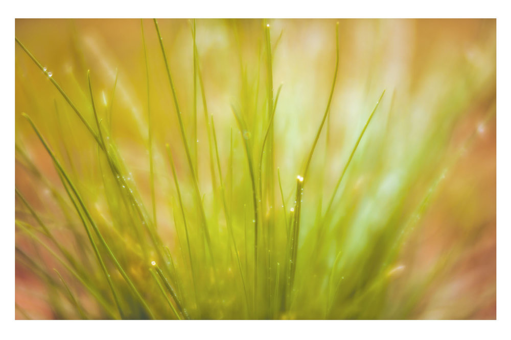 As the Grass Glows in the Afternoon.jpg