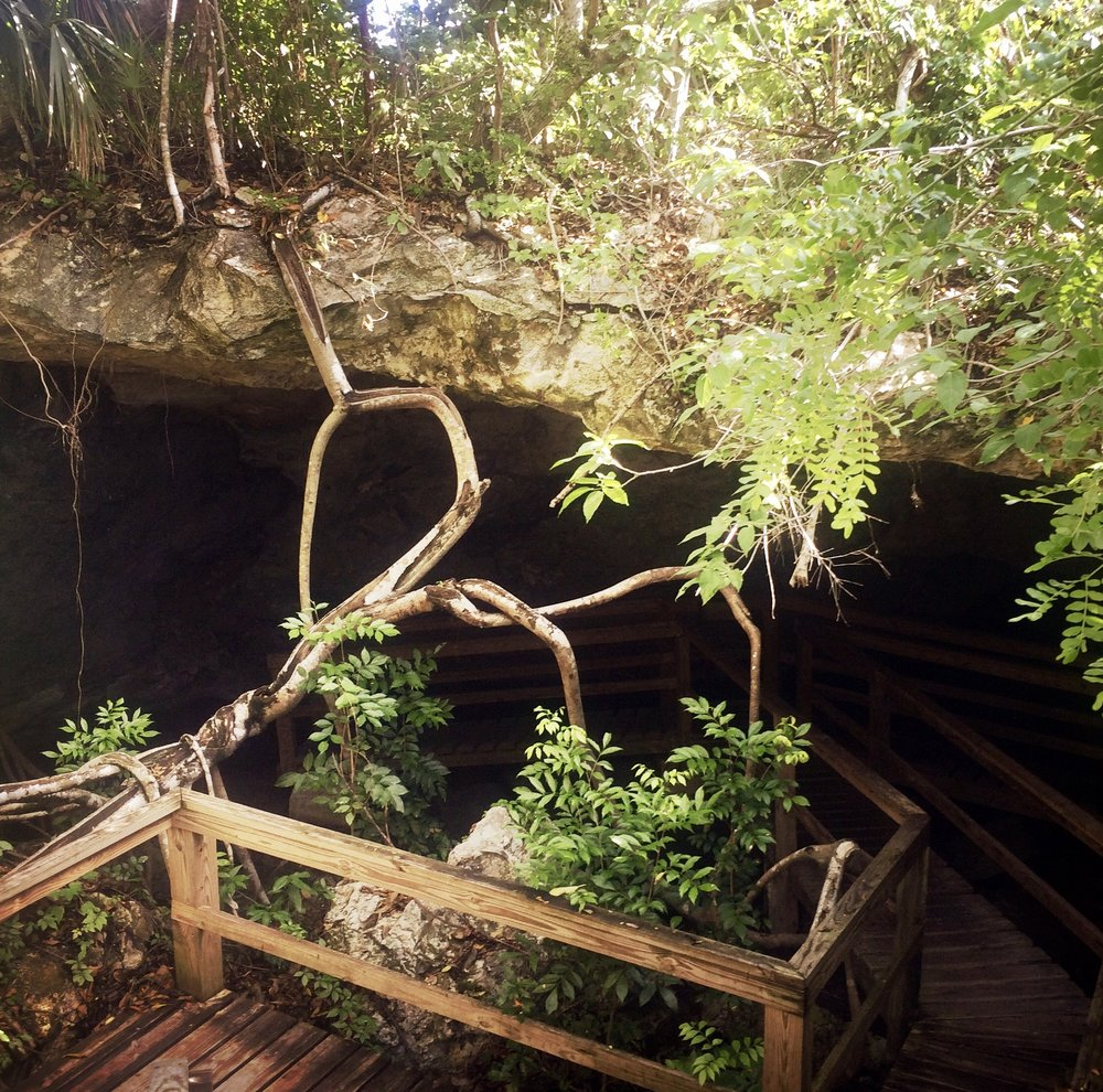 LUCAYAN NATIONAL PARK - GRAND BAHAMA ISLANDThe Lucayan National park is a 40-acre National Park that incorporates one of the largest underwater cave systems in the world. Two caves are open to the public.