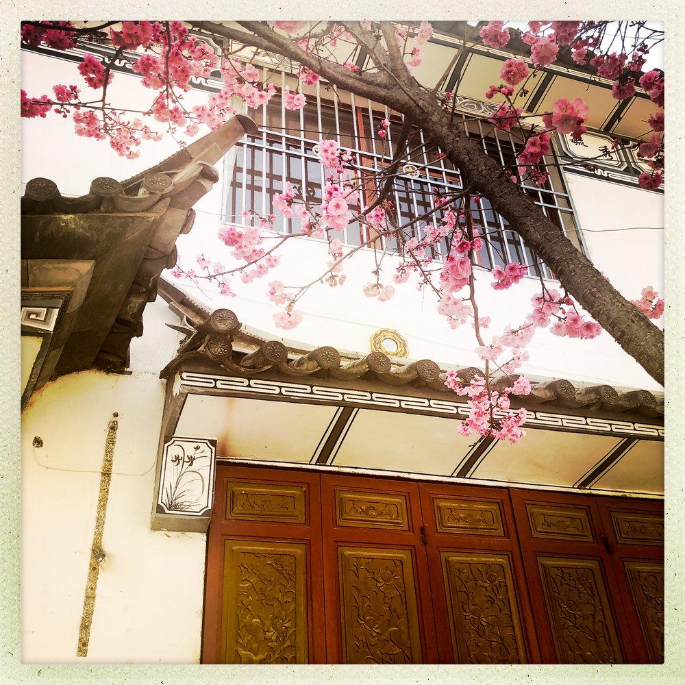 Open Air Places Xizhou Blooms.jpg