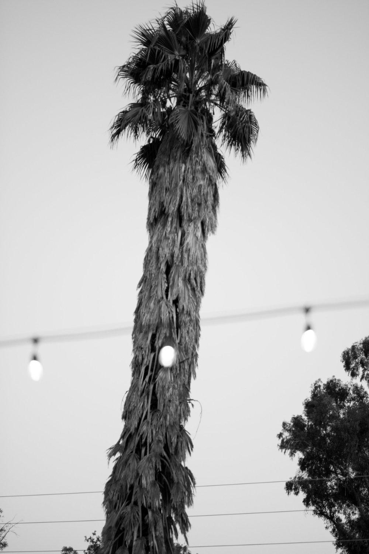 Anika & Max<br>Rehearsal Dinner<br><b>Ojai, CA</b>