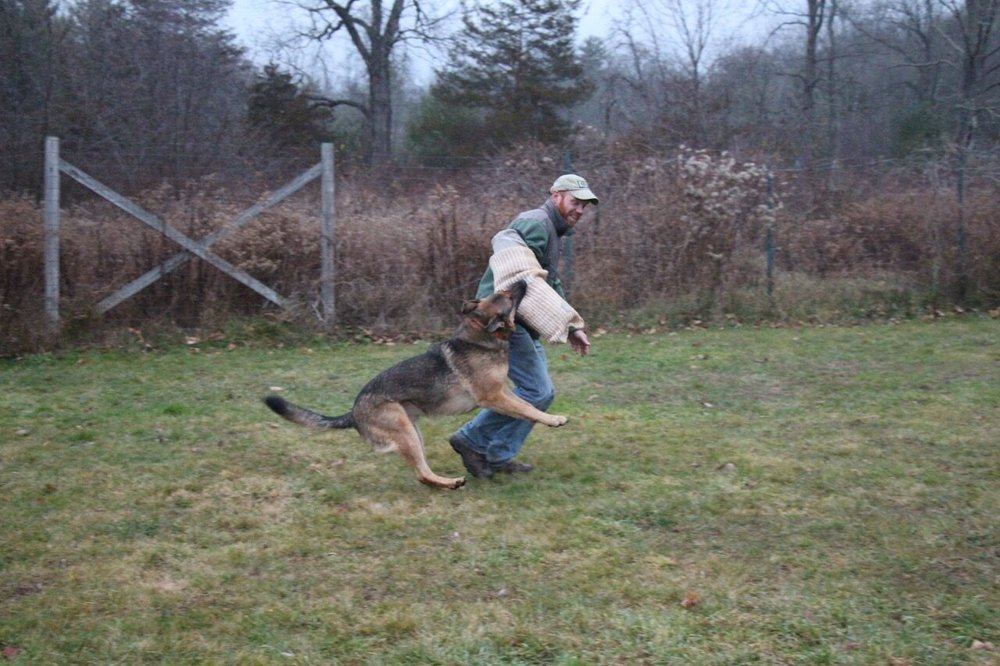kyle_warren_dogs_german_shepherd_bite_sleeve_protection_work_preview.jpeg