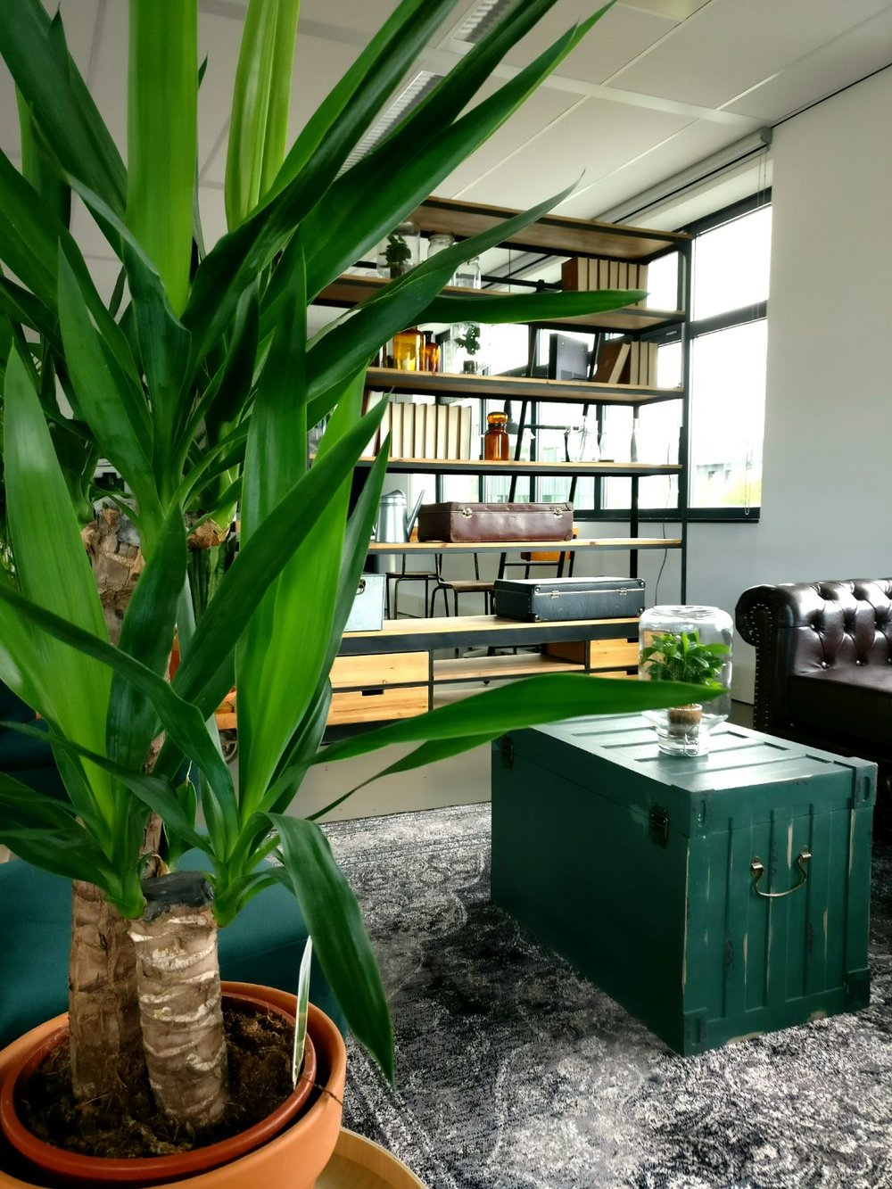 moderne kantoorruimte licht relaxhoek zithoek oude kist apothekersfles apothekerspot vintage display kast groene planten urban jungle.jpg