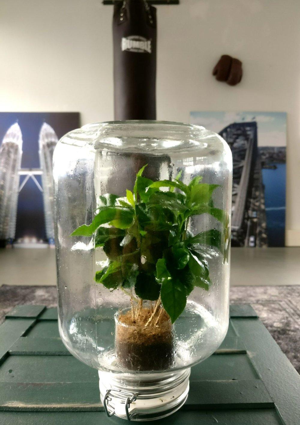 moderne kantoorruimte pikaplant in pot vintage oude kist licht keuken en planten.jpg