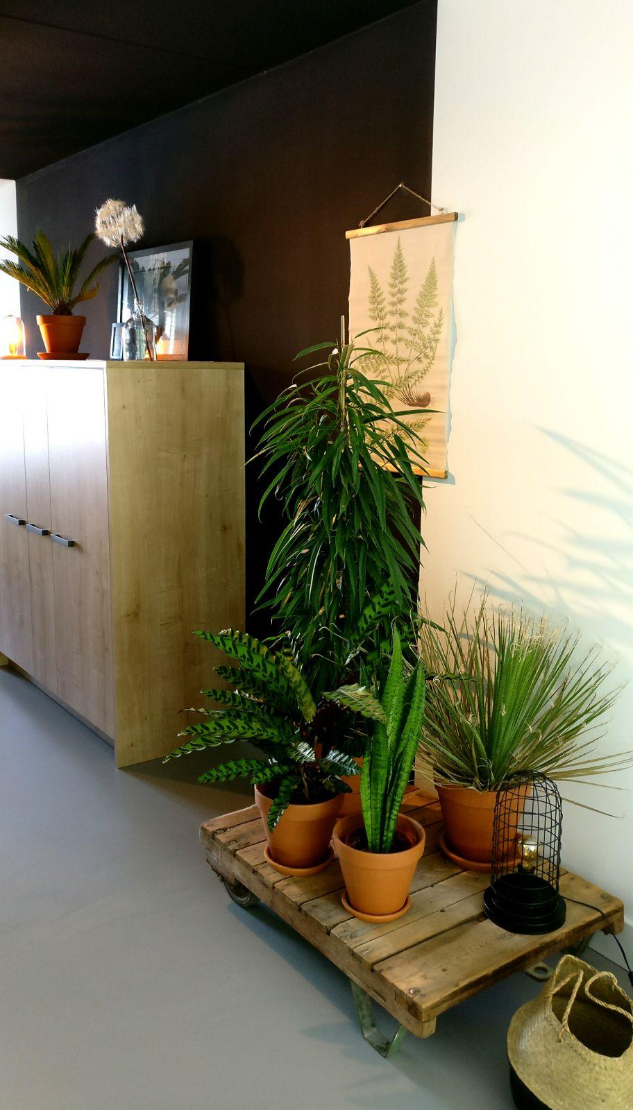 appartement nieuwbouw industrieel stoer zwarte keuken eiken keuken planten trolley urban jungle.jpg
