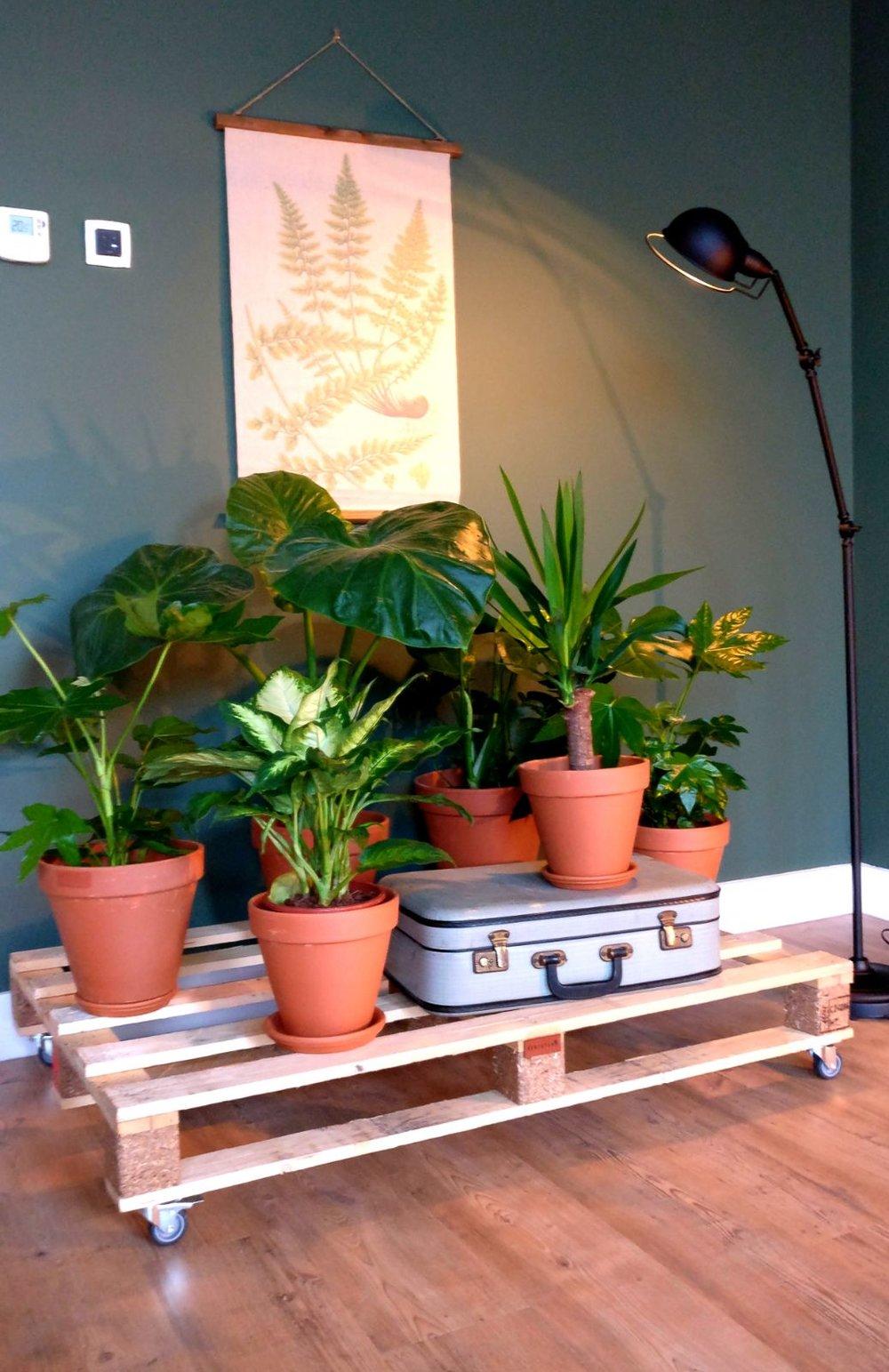 nieuwbouw woonkamer planten trolley pallet jieldé lamp urban jungle botanisch afbeelding vintage oude koffer mosgroen ral 6005 (2).jpg