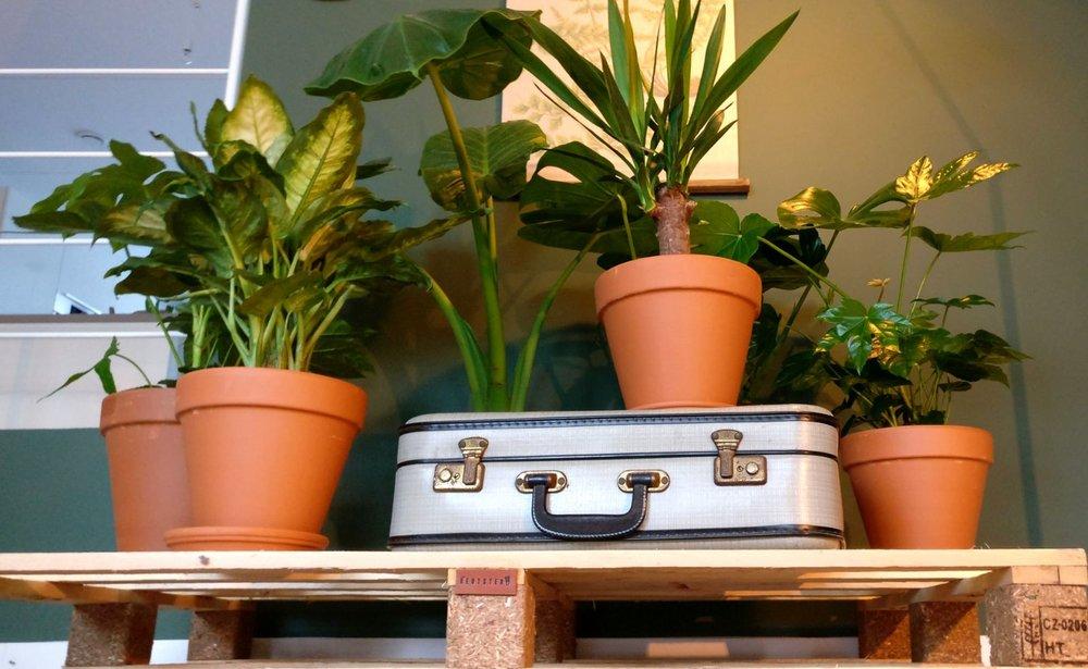 nieuwbouw woonkamer planten trolley pallet urban jungle botanisch vintage oude koffer mosgroen ral 6005.jpg