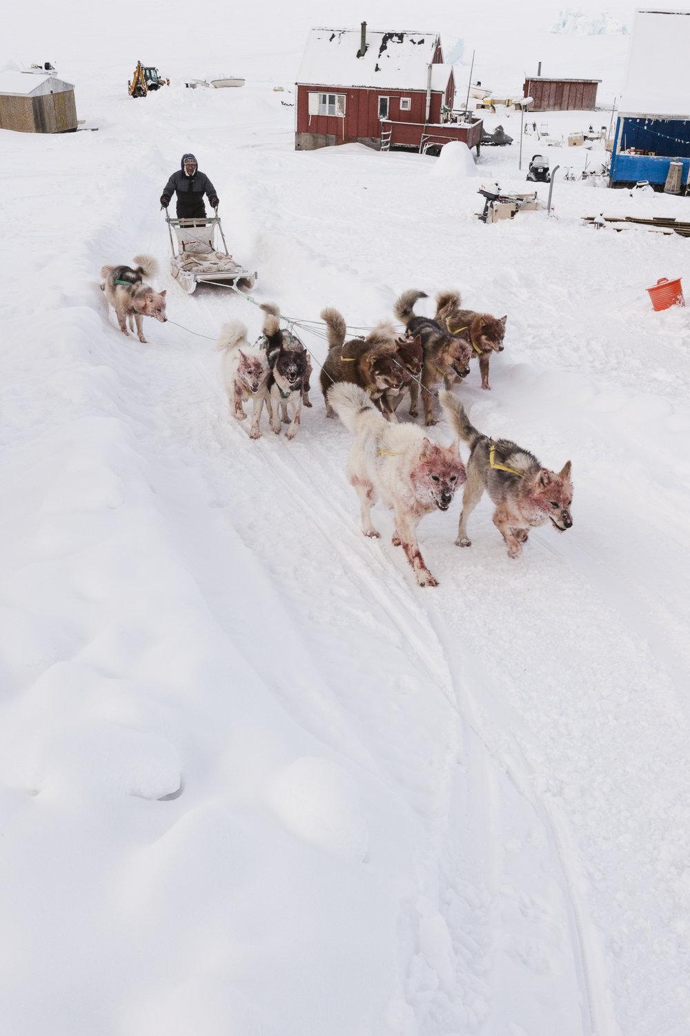 31.Defibaugh_Greenland_Illorsuit_c_3_51.jpg