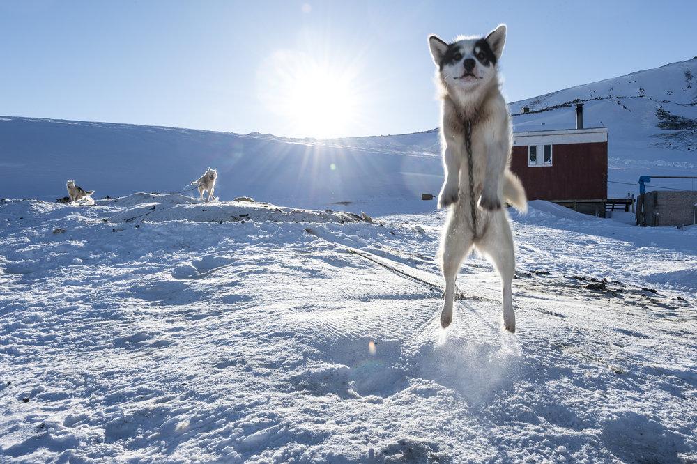 25.Defibaugh_Greenland_Illorsuit_c_3_29.jpg