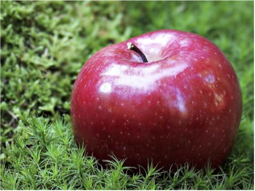 healthcare apple.jpg