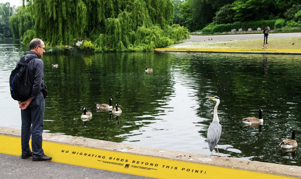 geese_borderWEB.jpg