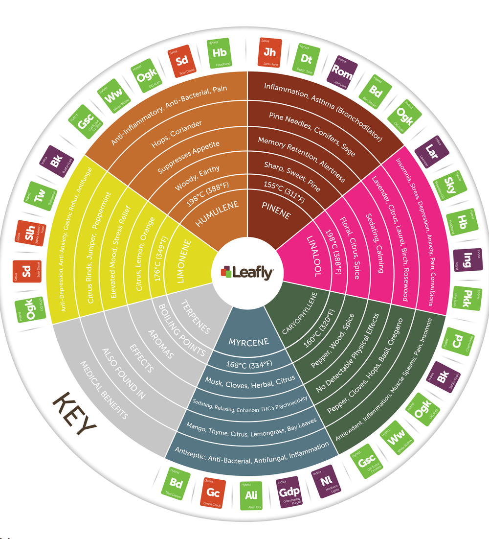 Leafly-Terpene-Wheel.png