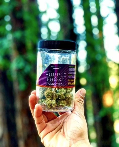Purple Frost Genetics - Buy an eighth get a pre-roll for one dollar!