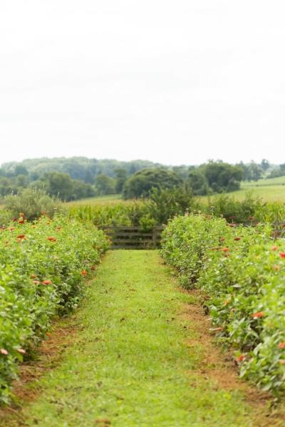 Endless Row Farm