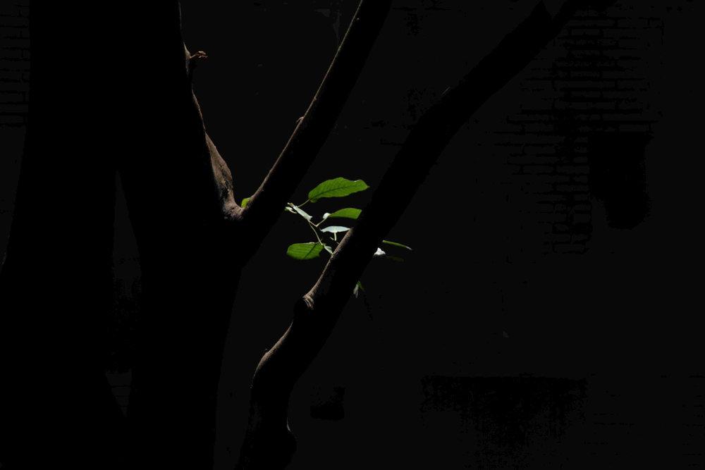 Indoor leaves