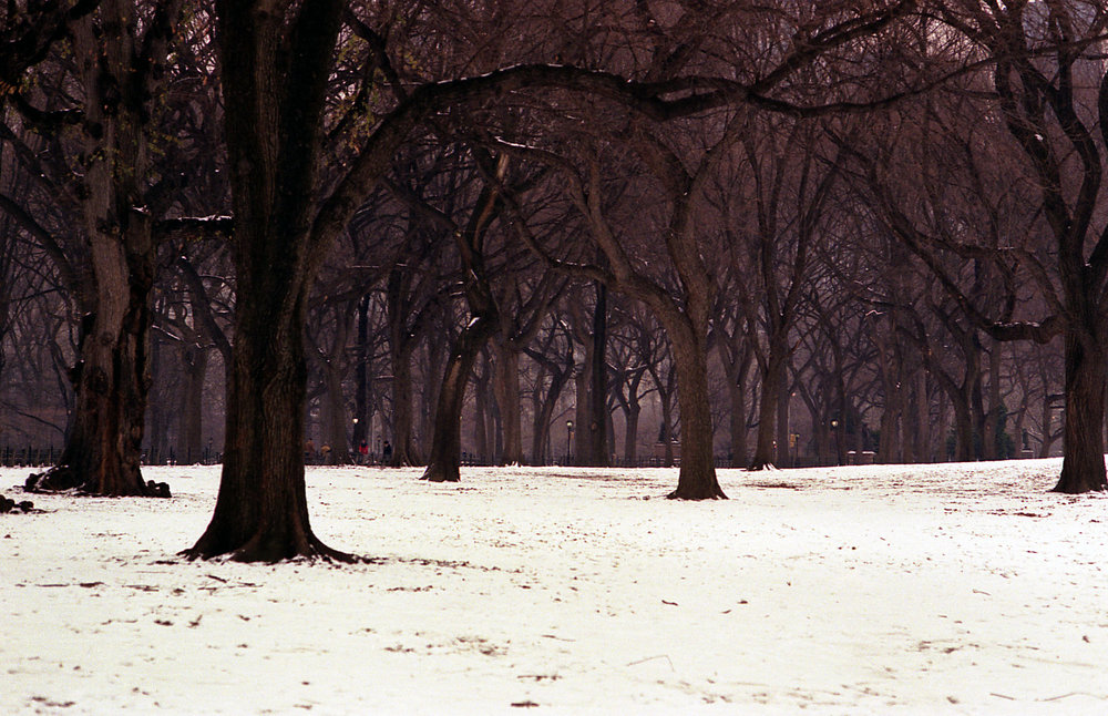 Central Park trees 6