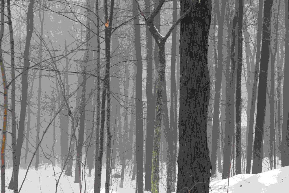 Vermont trees