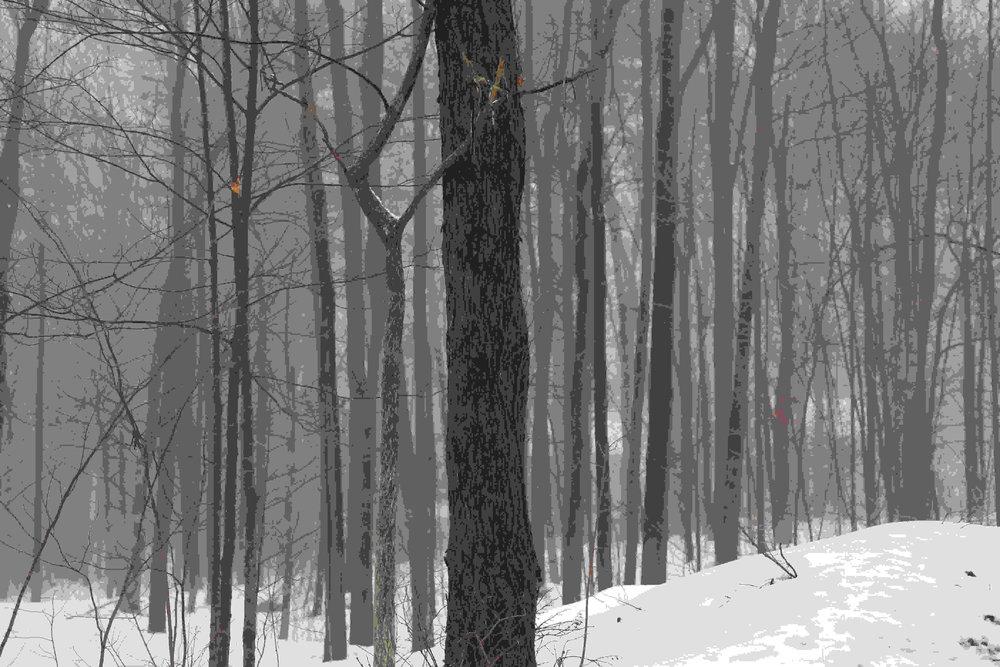 Vermont trees 1