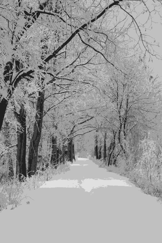 Trees winter scene