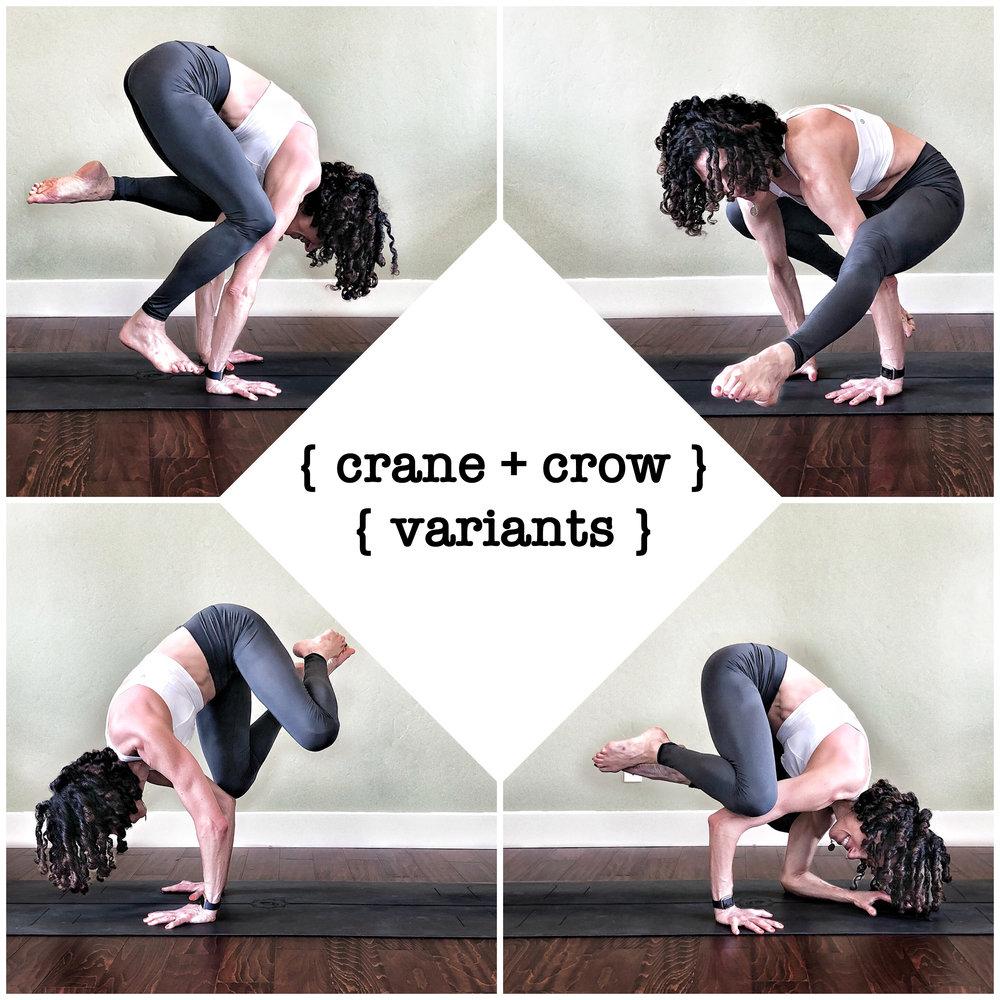 Crane/Crow Variants