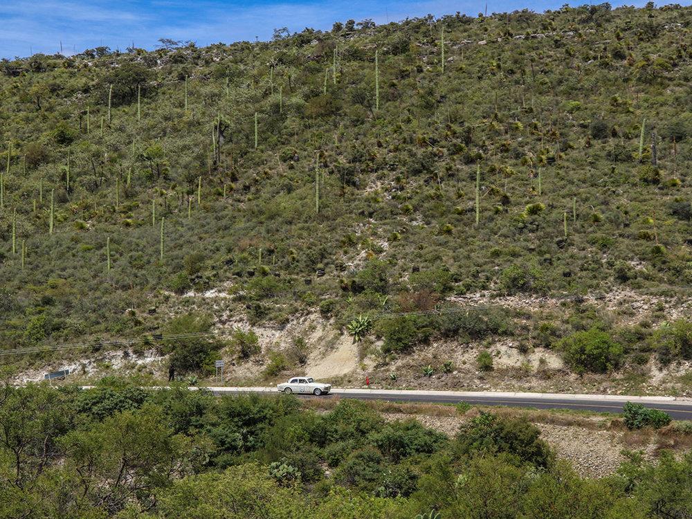 Running fast through scrub oak and cactus.