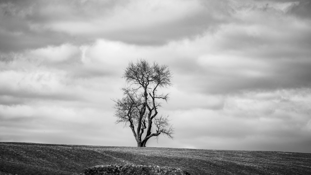 tree and the sky by John Canan