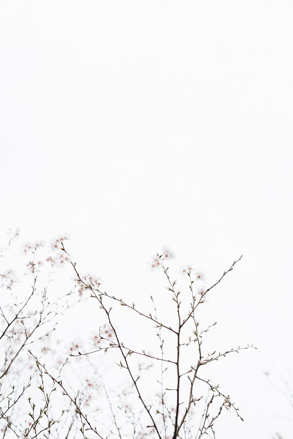 17-Free-Stock-Photos-Design-Pin-Pinterest17.jpg