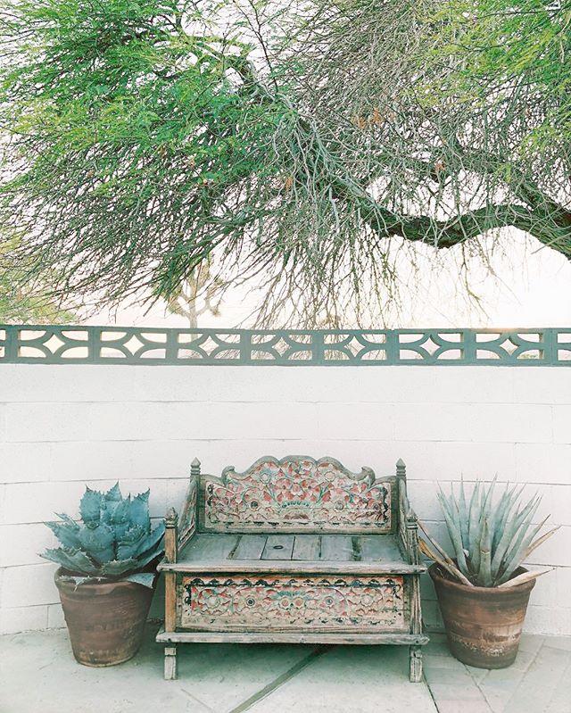 Under the mesquite tree. #joshuatree