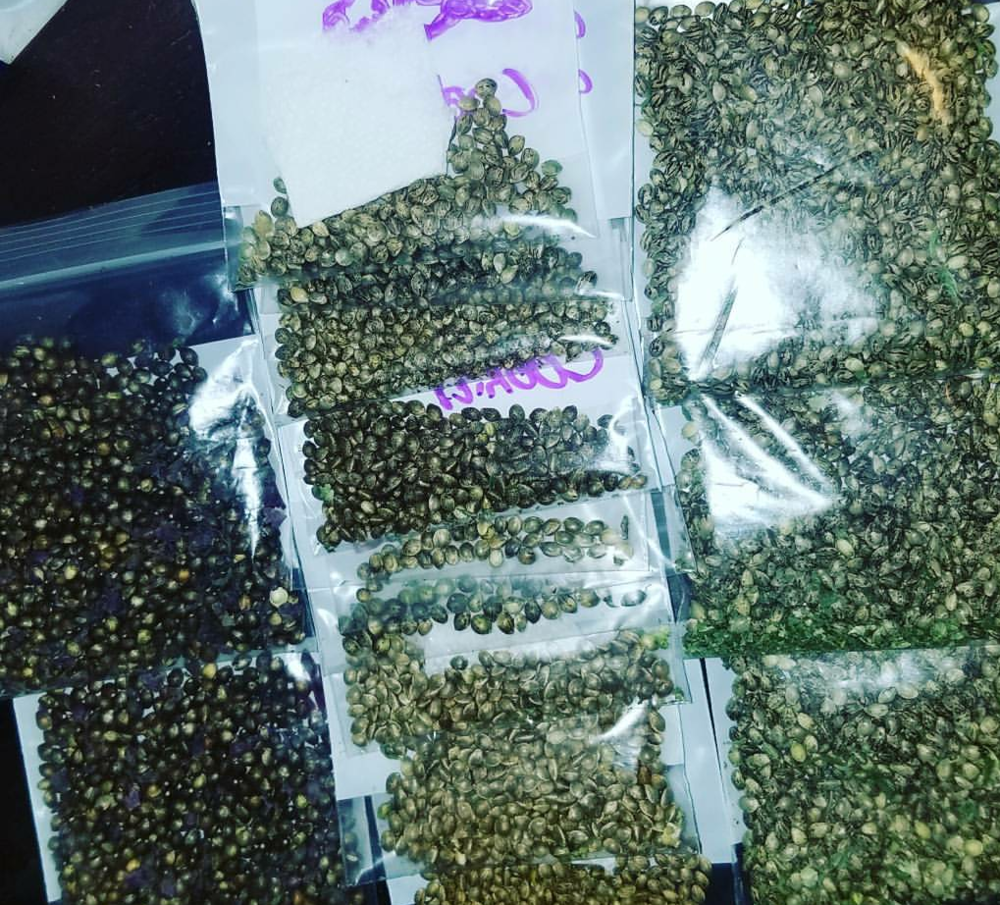 Seeds - Seeds - Coming in 2019All Our seeds are grown in the Matanuska River Valley, seeds from all over the world brought here and bred to create our KushTopia Genetics.