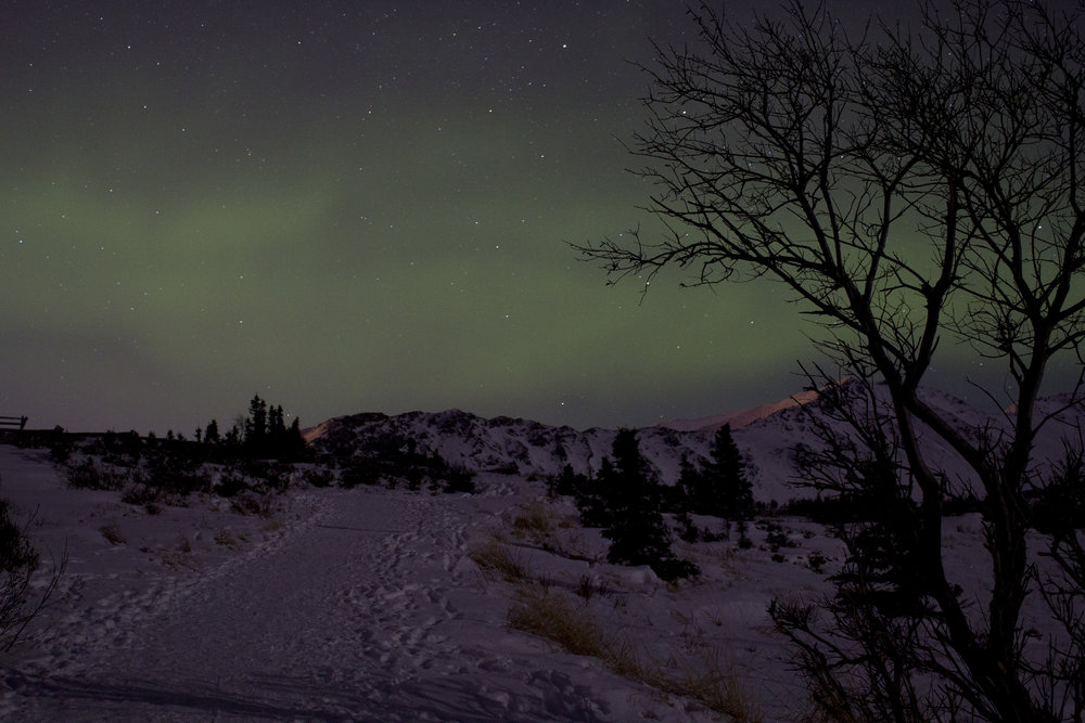auroras 01302016_1 (1).JPG