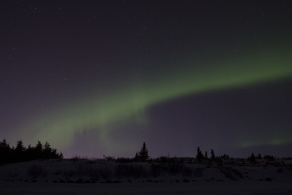 auroras 01302016_7.JPG