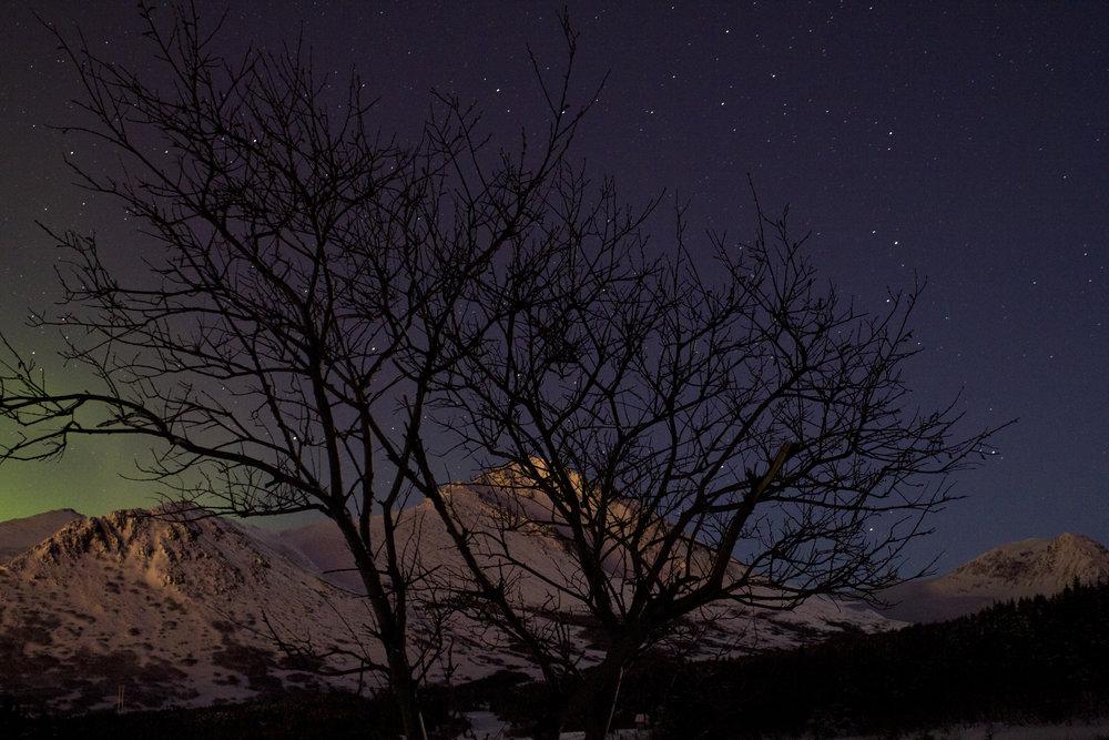 auroras 01302016_13.JPG