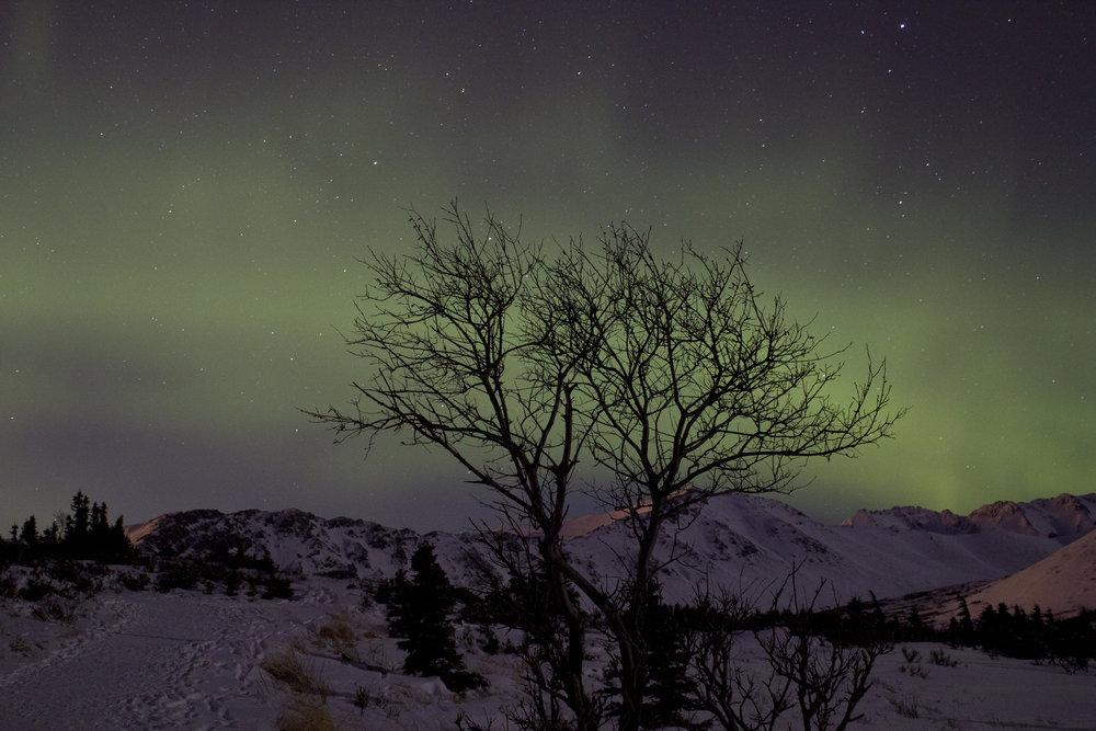auroras 01302016_14.JPG