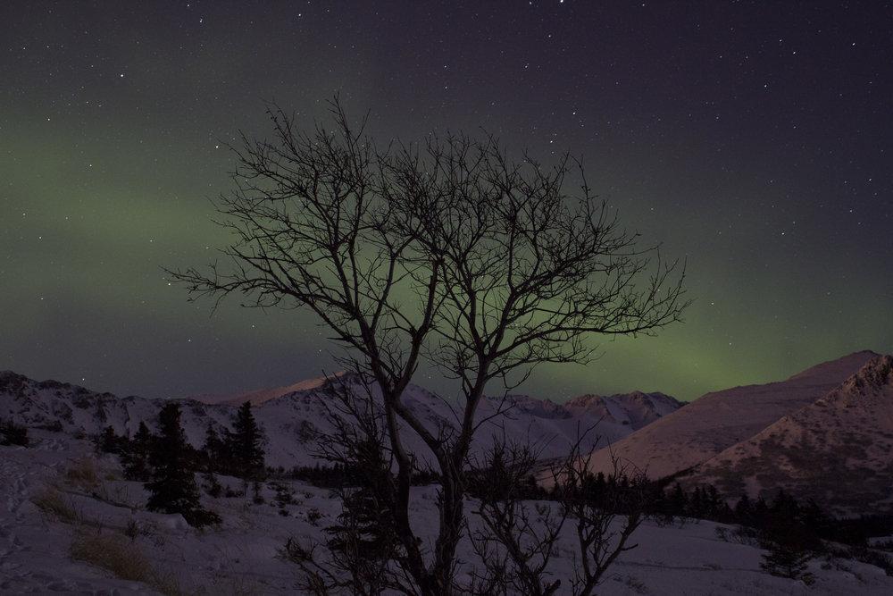 auroras 01302016_15.JPG