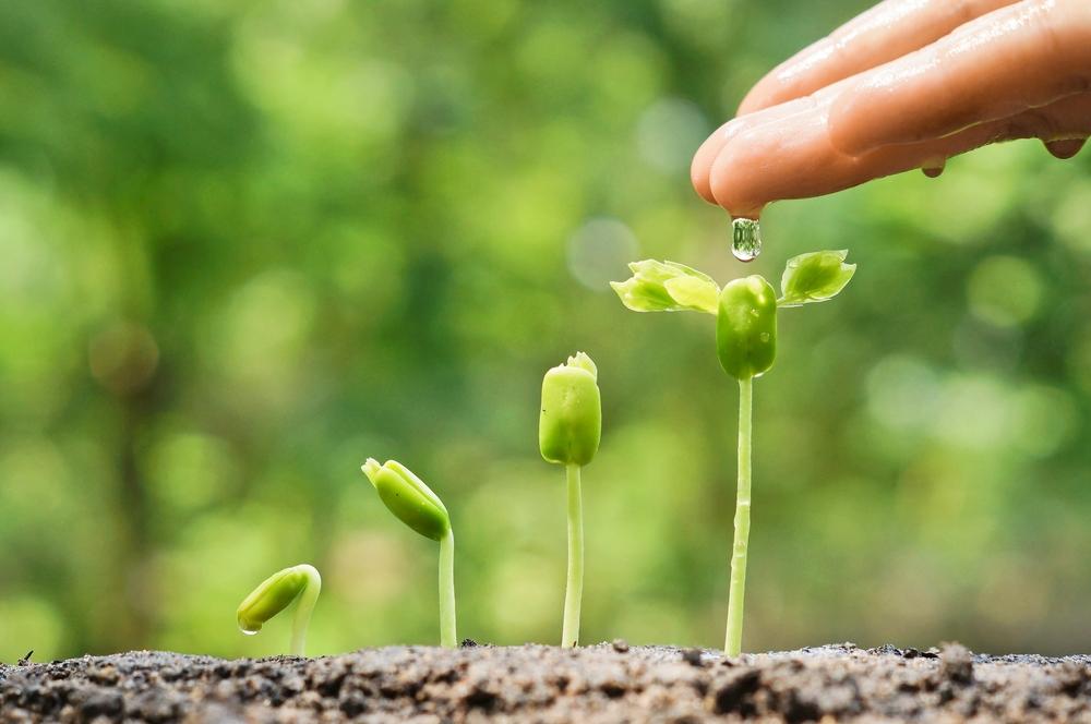 why-did-your-cannabis-seeds-fail-to-germinate.jpg