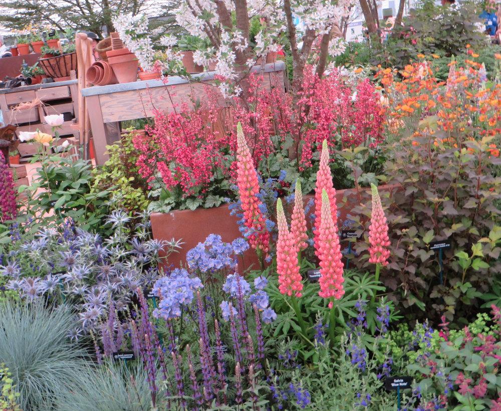 Hillier Garden Chelsea 2018 Gillian Goodson Designs_5.jpg