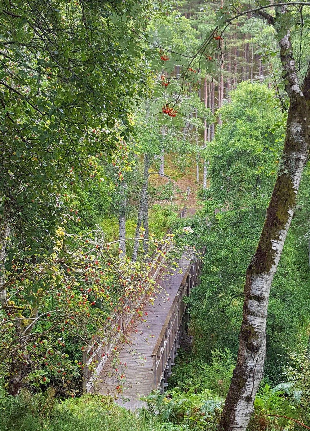woodenbridge.jpg