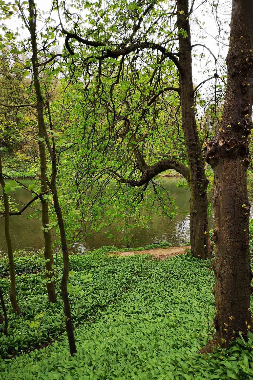 greenery and trees.jpg