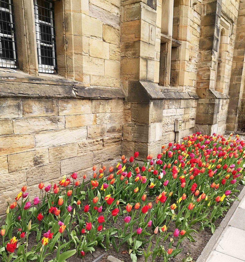 tulips and windows.jpg
