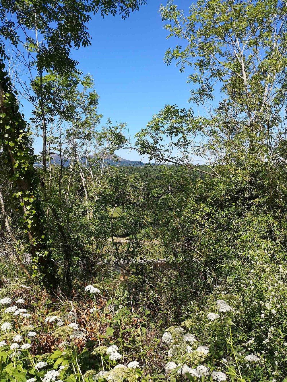 St Boswell's trees through to the Eildon Hills 1.jpg