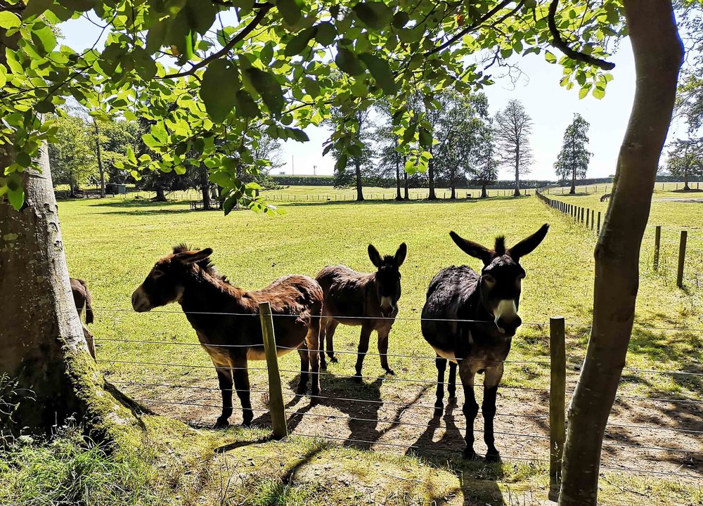 Three donkeys and an ass… Verily, my cup doth overrunneth in Thaint Bothwellth.