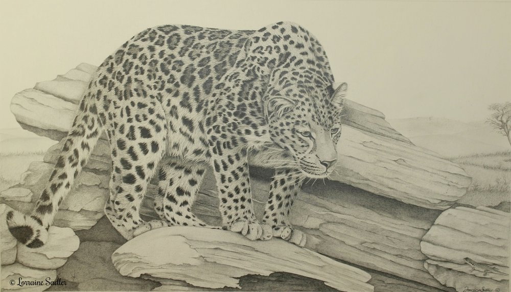 Spotted (21.5 x 12 inches) £2,800