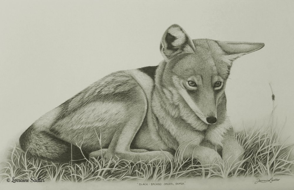 Black Backed Jackal Snack (20 x 10.5inches) £1,900