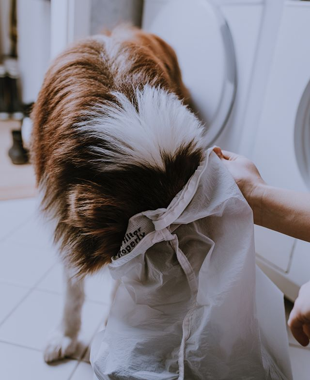 It's so easy to use the Guppyfriend Washing Bag to catch microfibers released from textiles during washing. Even the dog knows how to do it. Try it yourself and help us to protect nature. . . . #plasticfree #plasticwaste #plasticbottles #skipplastic #washingguide #stopmicrowaste #microplastic #plasticpollution #guppy #guppyfriend #washingbag #marinedebris #plasticfree #conciousliving #stopmicrowaste #plasticfreenature #safetheplanet #environmentallyfriendly #chemfreelife #nontoxic #earthfriendly #greenhome #saynotoplastic #naturalliving #reduceplastic #plasticwaste #environmentalpollution #nature #naturelovers #singleuseplastic