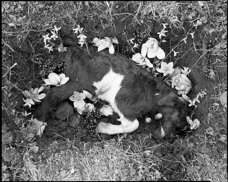 Post-mortem by Tom Rankin.