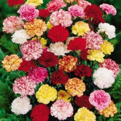 St. Paul's - Carnations.jpg