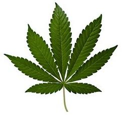 Cannabis+Leaf.jpg