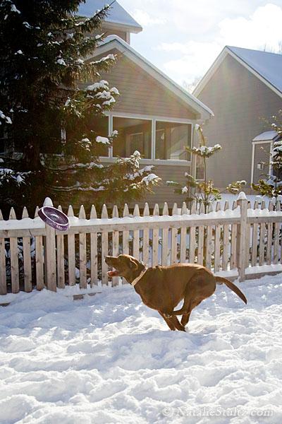 snow_frisbee_05.jpg