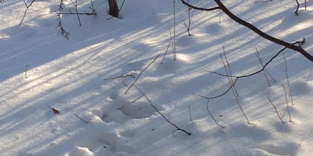 snowshadows.jpg