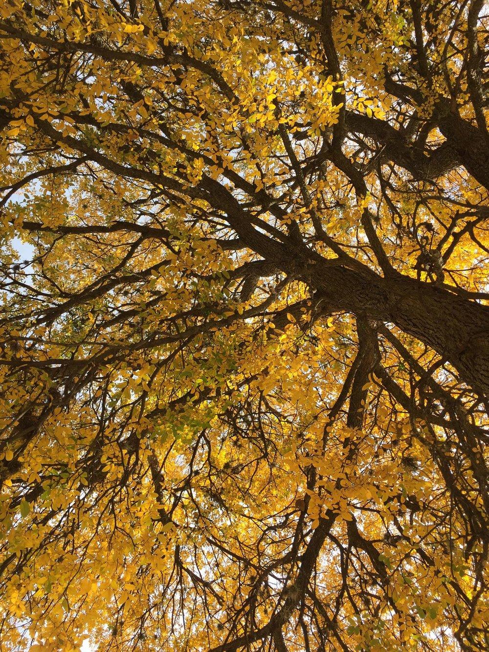 Fall Marissa 1.jpg